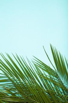 Folhas verdes de palmeira sobre fundo azul, com espaço de cópia