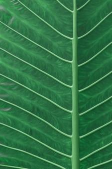 Folhas verdes de plantas tropicais textura de fundo