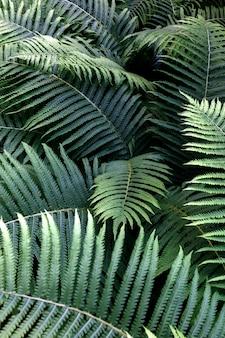 Folhas verdes de samambaia com gotas de chuva no tropical. vista do topo. postura plana. fundo de natureza, close-up de folhas de lírio do vale e samambaia.