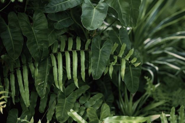 Folhas verdes de samambaia com o fundo na natureza.