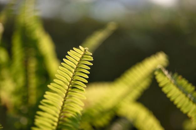Folhas verdes de samambaia de close-up no jardim em fundo natural