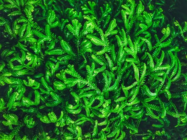 Folhas verdes de samambaia natural no jardim