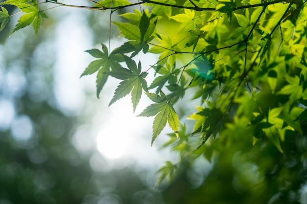 Folhas verdes de uma árvore com fundo desfocado