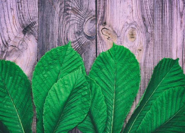 Folhas verdes de uma castanheira em uma superfície de superfície de madeira cinza