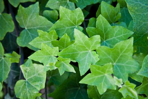 Folhas verdes de verão