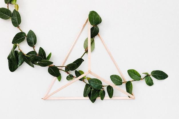 Folhas verdes dentro da pirâmide de madeira