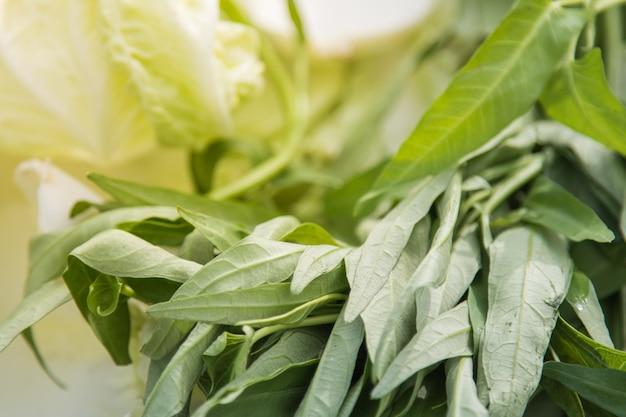 Folhas verdes do vegetal dos espinafres da água do close-up para cozinhar.