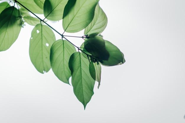 Folhas verdes e céu azul
