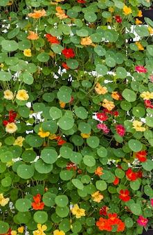 Folhas verdes e flores de fundo