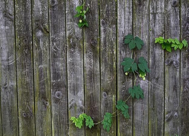 Folhas verdes e galhos no fundo de uma cerca de madeira cinza