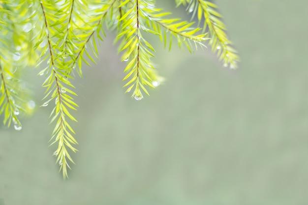 Folhas verdes e gotas de chuva com luz de fundo suave
