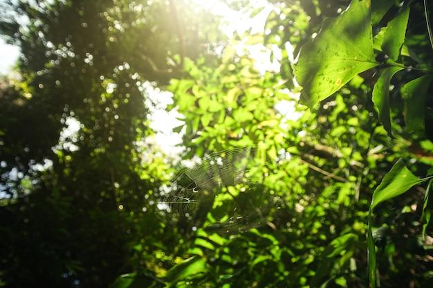 Folhas verdes e luz solar na manhã