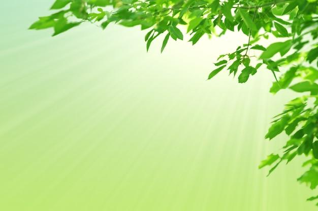 Folhas verdes e sol. fundo verde pastel da mola natural. copie o espaço.