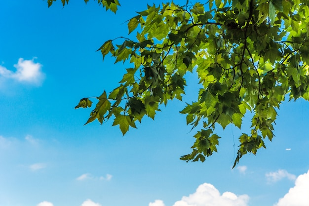Folhas verdes e sol