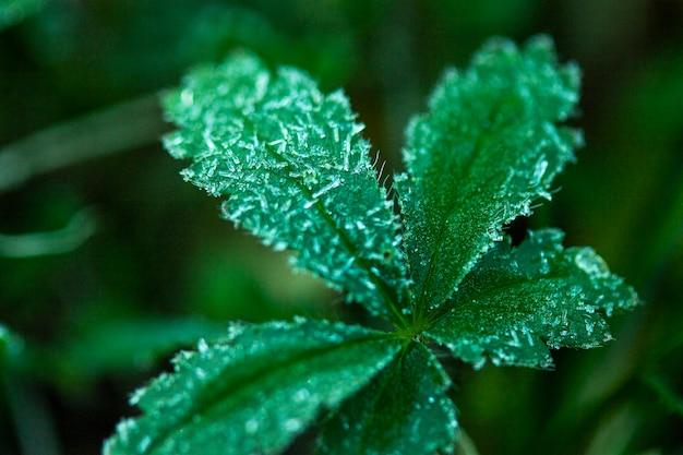 Folhas verdes em close-up