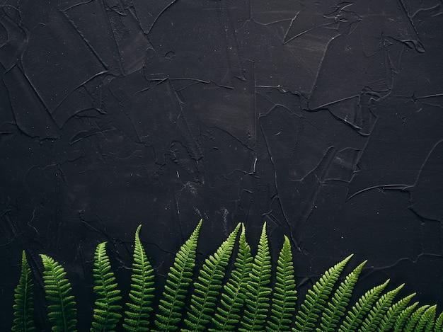 Folhas verdes em fundo preto