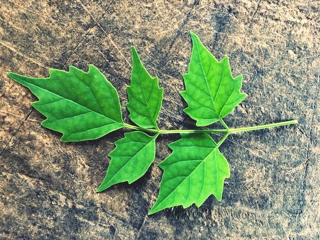 Folhas verdes em pisos de madeira velhos