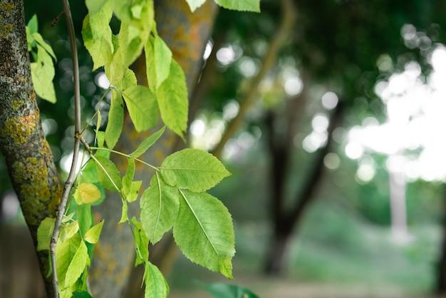 Folhas verdes em um dia ensolarado no início do outono folhas verdes em um fundo de floresta tema de outono