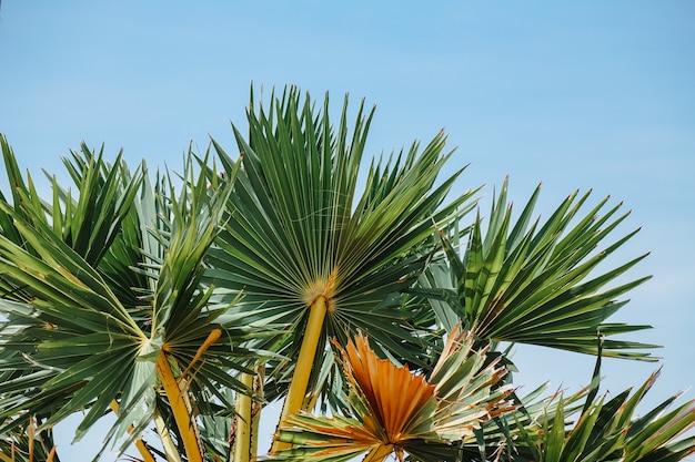 Folhas verdes em um dia quente e ensolarado, contraste com a cor do céu ao fundo