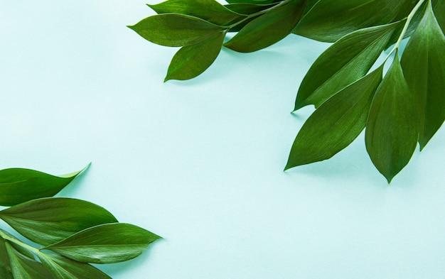 Folhas verdes em um fundo de hortelã