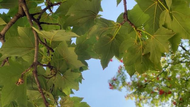 Folhas verdes em um galho de árvore contra o céu nu em 4k