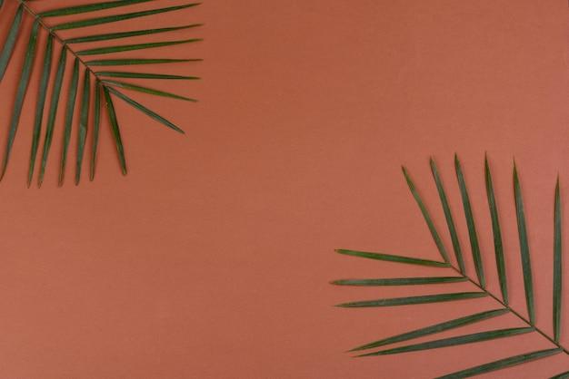 Folhas verdes em uma superfície colorida
