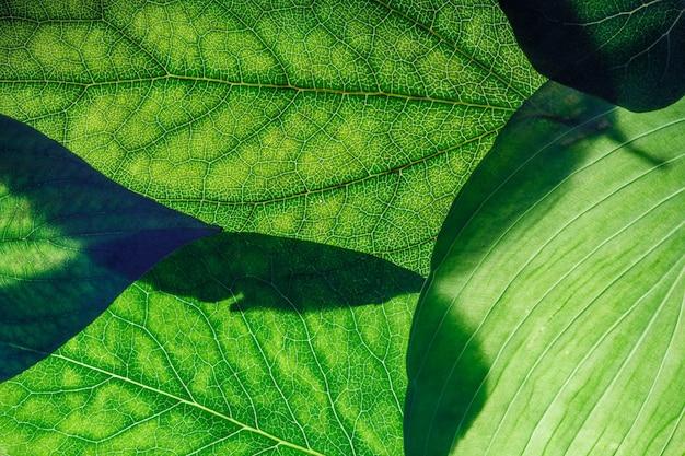 Folhas verdes fecham. plano de fundo para o design. foto de alta qualidade
