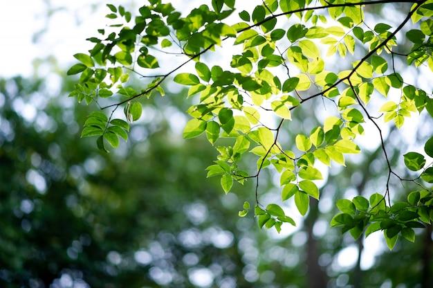 Folhas verdes férteis e árvores há uma luz que brilha no belo conceito natural.