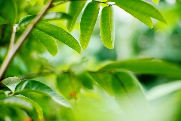 Folhas verdes frescas com fundo desfocado