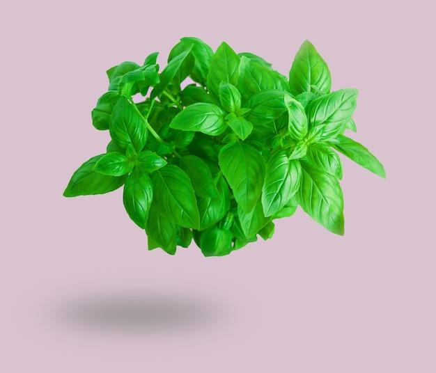 Folhas verdes frescas de manjericão voando