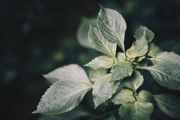 Folhas verdes frescas depois da chuva