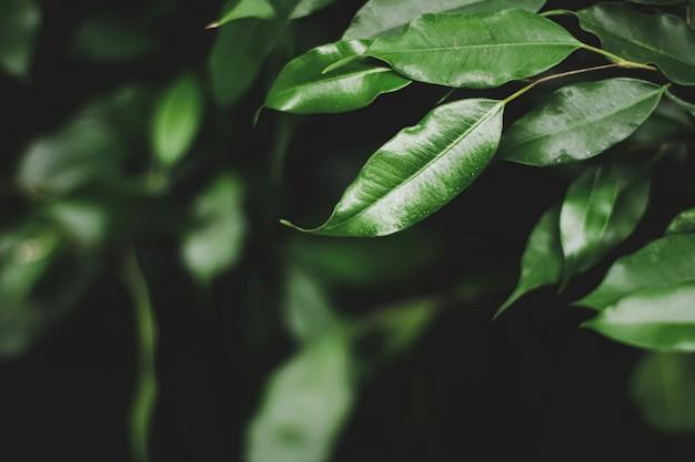 Folhas verdes frescas em um conceito escuro de floresta, natureza e meio ambiente