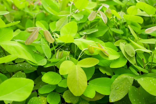 Folhas verdes frescas para o fundo