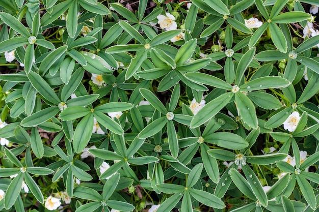 Folhas verdes frescas textura vista superior