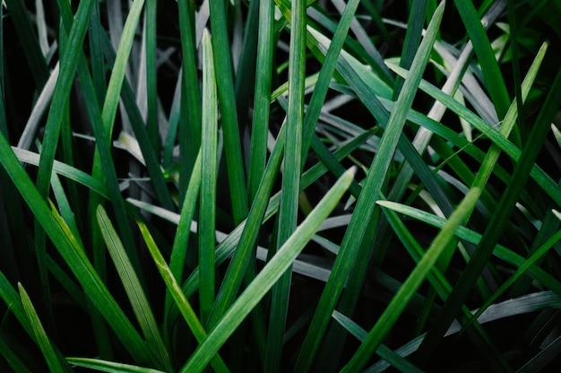 Folhas verdes fundo abstrato