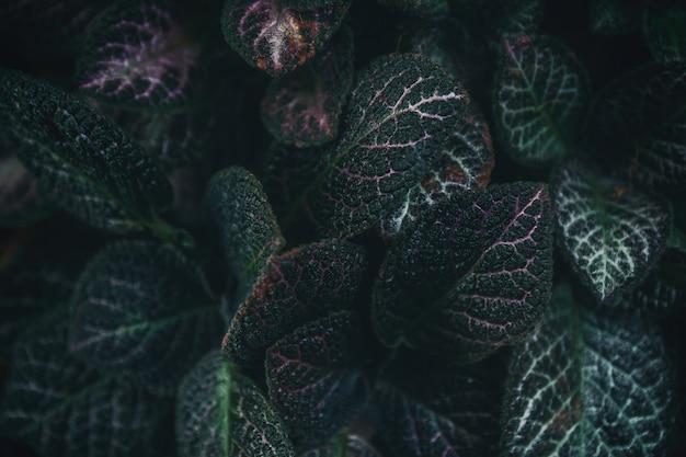Folhas verdes fundo da natureza