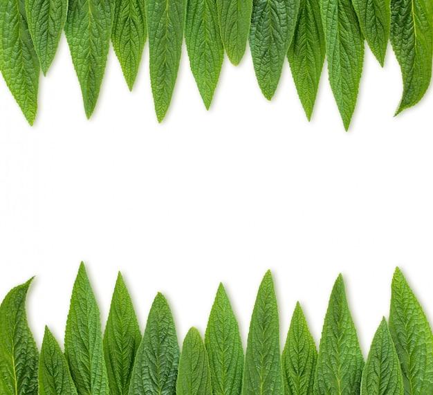 Folhas verdes fundo do quadro