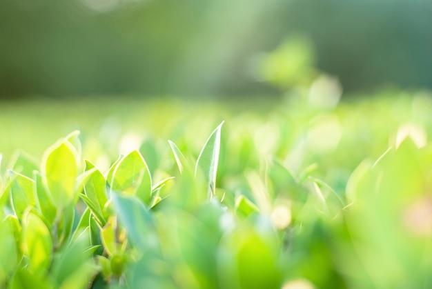 Folhas verdes, fundo estampado, turva