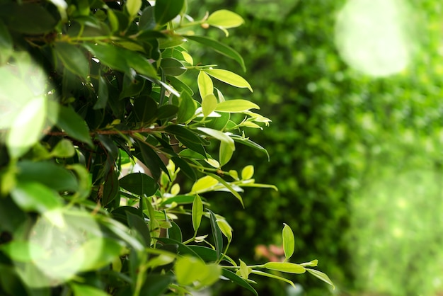 Folhas verdes fundo verde bokeh em dia ensolarado