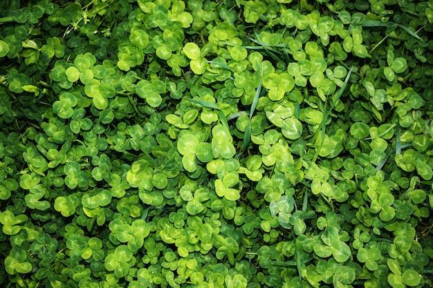 Folhas verdes, fundo