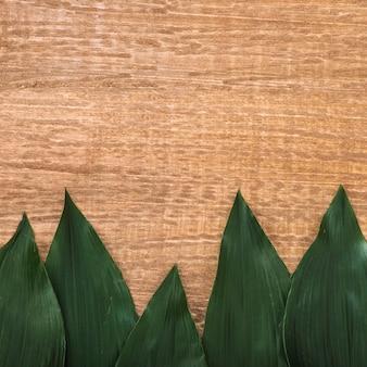 Folhas verdes grossas na mesa