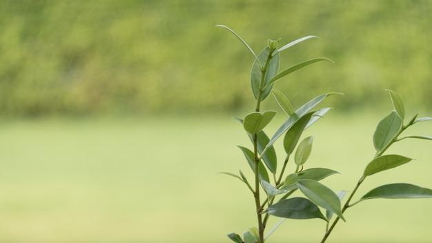 Folhas verdes jovens e broto de folha no fundo desfocado verde.
