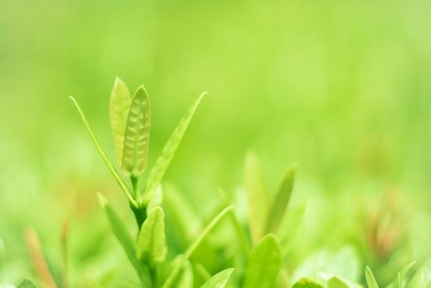 Folhas verdes, linda natureza estão crescendo.