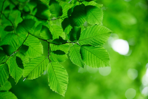 Folhas verdes na árvore