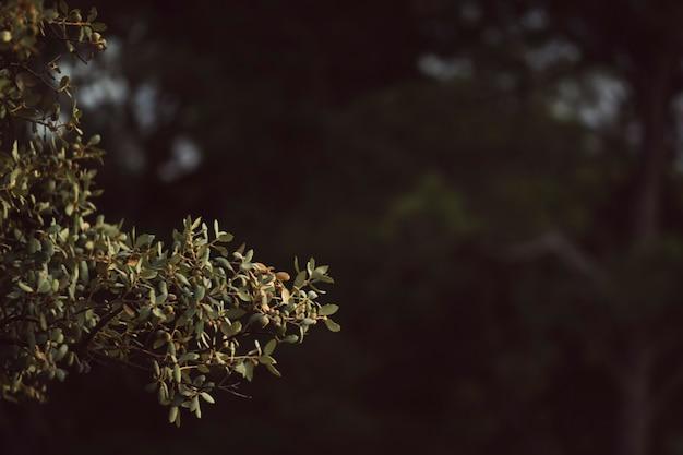 Folhas verdes naturais com fundo desfocado