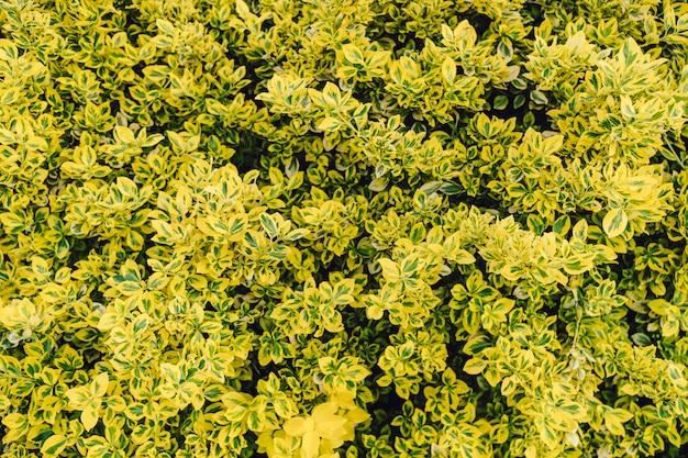 Folhas verdes naturais com textura