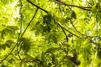 Folhas verdes no galho de uma árvore