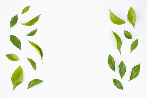 Folhas verdes no layout dos lados