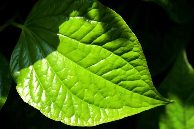 Folhas verdes no tropical