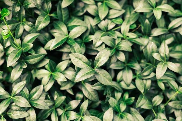 Folhas verdes padrão de fundo borvinik selvagem no parque natural com sombras escuras
